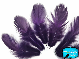 Large Purple Silver Pheasant Barred Plumage Feathers