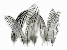 Black and White Stripey feathers for costumes, floral, decor, weddings.