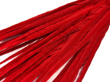 "20-22"" Red Ringneck Long Ringneck Pheasant Tail Wholesale Feathers (Bulk)"