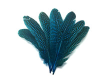 Blue Aqua Spotted Dotted Pointer and Rounds Feathers for crafts