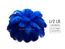"""1/2 Lb - 14-17"""" Royal Blue Ostrich Large Drab Wholesale Feathers (Bulk)"""