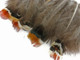 Brown with colorful tips Pheasant Feathers Small Wholesale