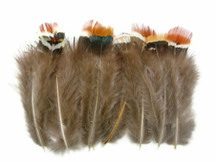1/4 Lb - Mix Lady Amherst Pheasant Plumage Wholesale Feathers (Bulk)