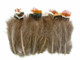 Colorful Green Orange Brown Small Fluffy Wispy Pheasant Feathers for jewelry, crafts, and costumes