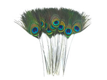 10 Pieces - Stripped Natural Green Peacock Tail Eye Feathers