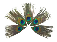10 Pieces - Full Eye Trimmed Natural Peacock Tail Feathers