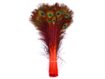 "20-25"" Orange Dyed Over Natural Peacock Tail Eye Wholesale Feathers (Bulk)"