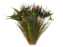 "10-12"" Natural Green Peacock 'T' Curved Tail Wholesale Feathers (Bulk)"