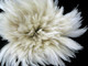 """6-7"""" Natural White Strung Rooster Neck Hackle Wholesale Feathers (Bulk)"""