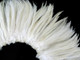 Stiff Rooster Feathers wholesale eggshell white