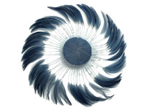 1 Piece - DARK GREY whole Beaded Pinwheel Stripped Rooster Hackle Feather Plates