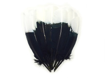 These high quality turkey feathers are black with white tips. They look very similar to eagle feathers. These feathers can be used for home decor, backdrops, crafts, costumes, and more.