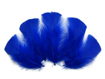 1/4 lb - ROYAL BLUE Turkey T-Base Wholesale Body Plumage Feathers (bulk)