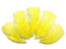 1/4 Lb - Yellow Turkey T-Base Wholesale Body Plumage Feathers (Bulk)