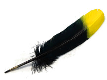 6 Pieces - Yellow & Black Two Tone Turkey Round Tom Wing Secondary Quill Feathers