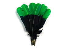 1/4 Lb - Green & Black Two Tone Turkey Round Tom Wing Secondary Quill Feathers