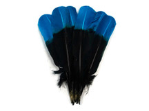 1/4 Lb - Turquoise Blue & Black Two Tone Turkey Round Tom Wing Secondary Quill Feathers