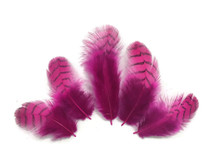 10 Pieces - Hot Pink Dyed Gray Partridge Small Plumage Feathers