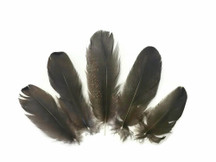 10 Pieces - BLACK BRONZE Small Wild Turkey Rounds Feathers