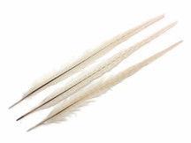 "10 Pieces - 20-22"" IVORY Long Ringneck Pheasant Tail Feathers"