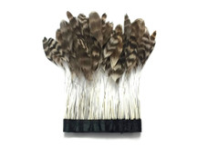 natural chinchilla stripped Coque Feathers (rooster tail feathers)
