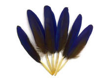4 Pieces - Small Natural Blue Hyacinth Macaw Wing Feather -Rare-
