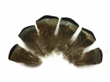 5 Pieces - Small Wild Bronze Turkey Flats Feathers