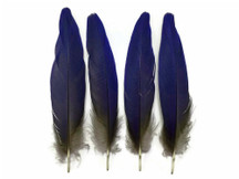 4 Pieces - Natural Royal Blue Hyacinth Macaw Rare Vent Feathers - rare -