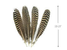 """1 Pair -  10 - 15"""" and Up Natural Barred Mottled Peacock Wing Quills Feathers"""