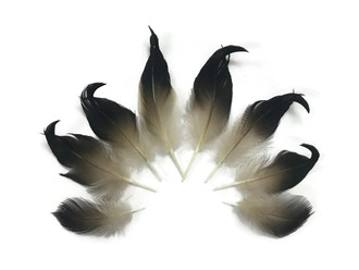 4 Pieces Natural Mallard Feathers Moonlight Feather