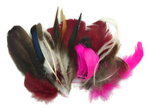 Collection 96 - Mix Random Feather Sample Pack (Bulk)