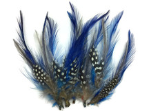 Trimmed blue and dotted craft feathers for hats, sewing
