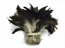 Black Bronze Natural Strung Rooster Schlappen Wholesale Feathers (Bulk)
