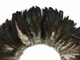 Shiny black and white fluffy rooster feathers