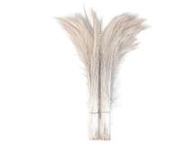 "50 Pieces - 30-35"" Ivory Bleached Peacock Swords Cut Wholesale Feathers (Bulk)"
