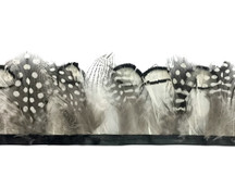 1 Yard - Natural Black White Guinea & Pheasant Plumage Feather Trim