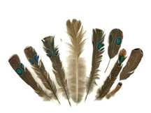 9 Pieces - Imperfect Grey and Malayan Peacock Pheasant Green Double Eye Wing Feather