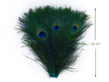 "50 Pieces - 10-12"" Turquoise Blue Dyed Over Natural Peacock Tail Eye Wholesale Feathers (Bulk)"