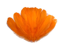 1/4 Lb - Orange Goose Nagoire Wholesale Feathers (Bulk)