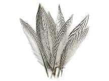 "50 Pieces - 10-12"" Natural Silver Tail Pheasant Wholesale Feathers (bulk)"