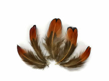 1/4 Lbs - Laced Heart Ringneck Pheasant Plumage Wholesale Feathers (Bulk)