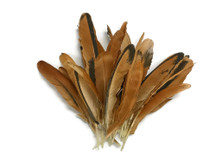 10 Pieces - Natural Golden Brown Hen Wing Quills Feathers