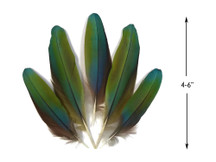 4 Pieces - Iridescent Green And Yellow Greenwing Macaw Soft Wing Feathers -Rare-