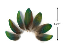 4 Pieces - Ombre Yellow Blue & Green Greenwing Macaw Plumage Feathers - Rare-