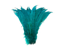 "1/2 Lb  - 18-26"" Teal Blue Ostrich Nandu Trimmed Long Wholesale Feathers (Bulk)"