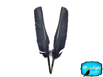 Grey Turkey Pointers Primary Wing Quill Large Wholesale Feathers (Bulk)