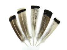 4 Pieces - Natural Royal Palm Cream and Black Wild Turkey Tail Feathers
