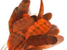 1 Dozen - Orange Chinchilla Stripped Rooster Coque Tail Feathers