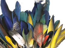 Collection 115 - Mix Random Feather Sample Pack (Bulk)