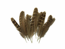 10 Pieces - Natural Brown Barred Partridge Small Wing Feathers